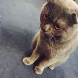 busyyy_cattt