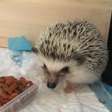 stewiethehedgehog