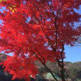 redgloom