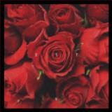 rosesarenotblue