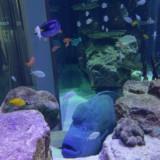 fishqueenie