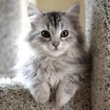 catz_cute