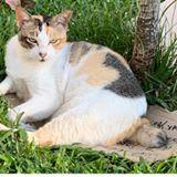 kittycat6123