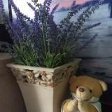 lavender_garden