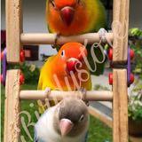 birdystore