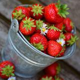 histrawberry