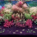 mr.aquatic.plants