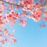 charmry_pink_shop