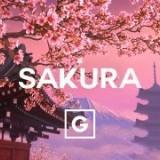 sakura_6379