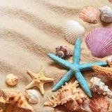 shesells.seashells