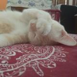 nini_the_cat