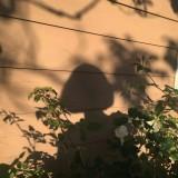 asyuraro