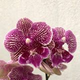 exclusiveorchids