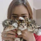 lux_asyi