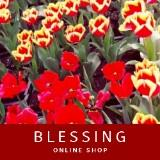 blessing8888