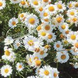 sunflowerstory