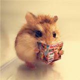hamster_master