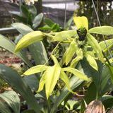 orchidschamber