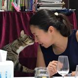 lavander_cat