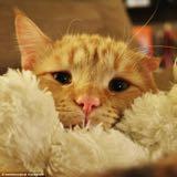 kitty_icel16
