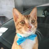 orange_meow