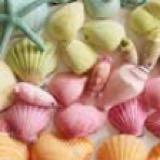 seashell_slxmes
