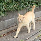 catcatcat0913