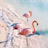 flamingo.sea