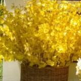 sunflowerrr1972
