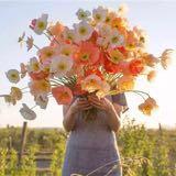blossomhk