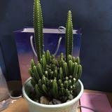 cactus0905