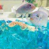 rawfish9