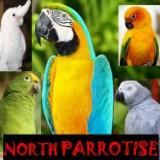 north.parrotise