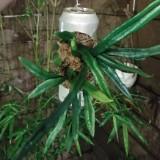 circle_plant