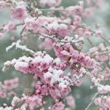 snowflurry