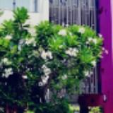 cometo_dream957373x0