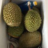 duriandd