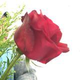 rose_wai