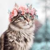 razhiya_94