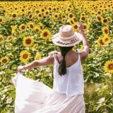 sunflowerfarm