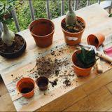 the.petite.planter