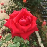 roseee1215