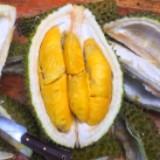 durianbejo