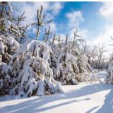 winterrentals