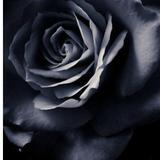 blackrose168