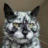 cat12th