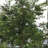 carlwong2006