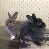 bunny_says