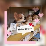 hell0_pretty