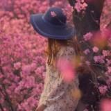 rose017